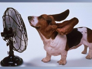 dog-with-fan.jpg